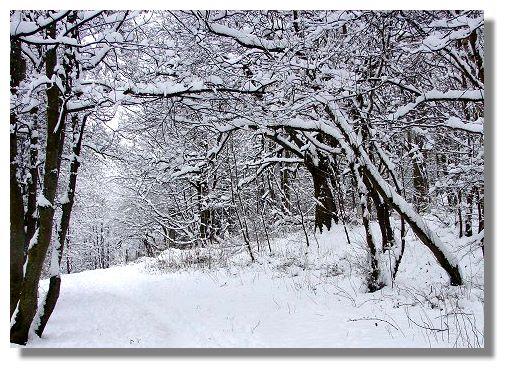Snow scene kilmardinny loch