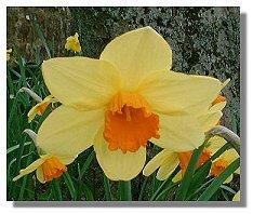 цветы из бисера и их схемы.