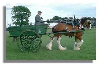 Clydesdale Horse at Royal Highland Show