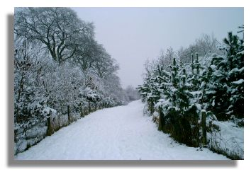 http://www.rampantscotland.com/graphics/snow633a.jpg